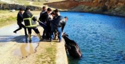 Sulama kanalına düşen ineği itfaiye ekipleri kurtardı