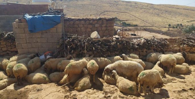 Nusaybin'de Su kuyuların elektriği kesildi, hayvanlar telef olmak üzere