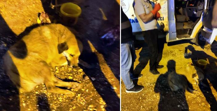 Yaralı köpek hayvan barınağına götürüldü