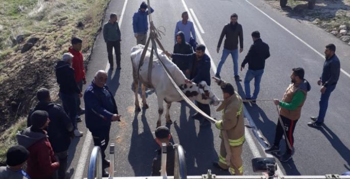 Dağlık bölgede mahsur kalan inek itfaiye ekipleri tarafından kurtarıldı