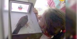 İlkokul öğrencisinden örnek alınacak hayvan sevgisi davranışı
