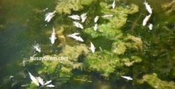 Kanalizasyon çalışması için kanal suyu kesildi, balıklar telef oldu