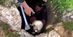 Kuyuda mahsur kalan yavru köpeği itfaiyeciler kurtardı