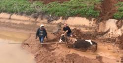 Nusaybin'de mahsur kalan ineği itfaiye ekipleri kurtardı