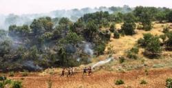 Nusaybin'de ormanlık alanda çıkan yangın sürüyor