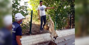 Tellerde asılı kalan köpeği vatandaşlar kurtardı