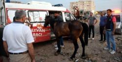 Yaralı at Mardin Hayvan Hastanesine taşındı