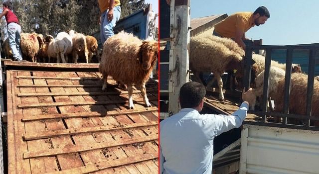 Projesi kabul edilen 4 Genç Çiftçiye Küçükbaş hayvan verildi