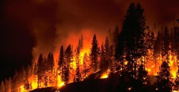 2014 Yılında Mardin'de 91 Orman Yangını Çıktı
