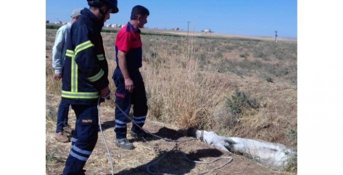 Nusaybin'de bataklığa saplanan eşeği itfaiye ekipleri kurtardı