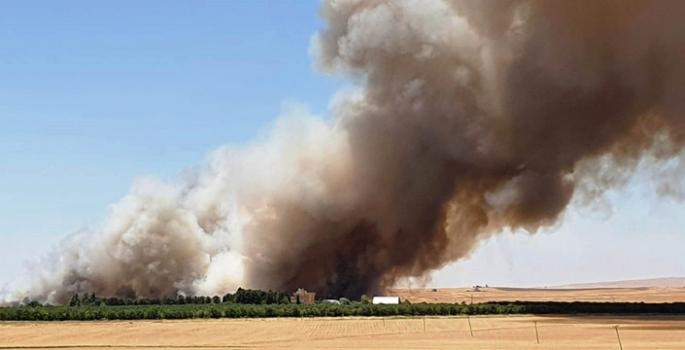 Nusaybin'de buğday tarlasında çıkan yangın korkuttu