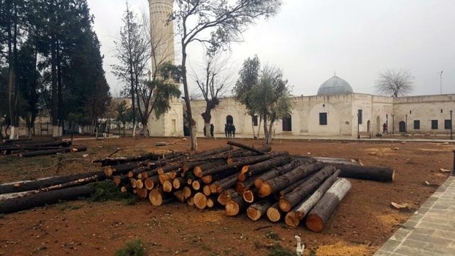 Zeynel Abidin Camisindeki ağaçların kesilmesine tepki